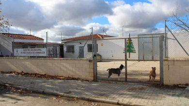 Photo of Recogida y custodia de mascotas a personas afectadas – Ayuntamiento de Zamora